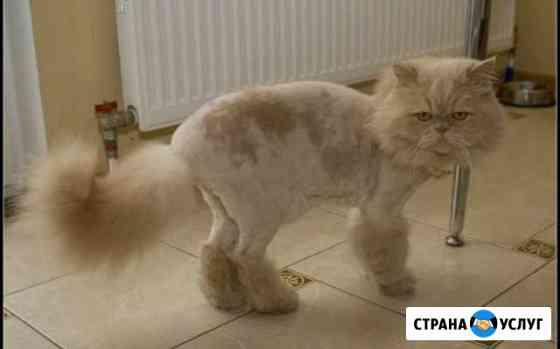 Стрижка кошек и собак Магнитогорск