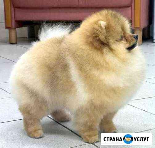 Профессиональные стрижки собак и кошек Мурманск
