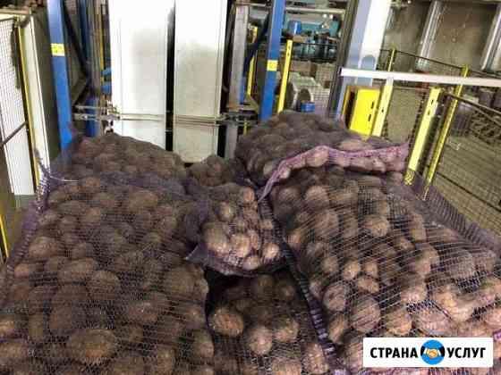 Картофель Брянск