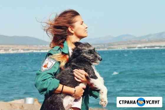 Передержка собак, собачья няня, догситтер Красноярск