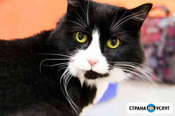 Передержка для кошек BookinCat Люберцы Люберцы