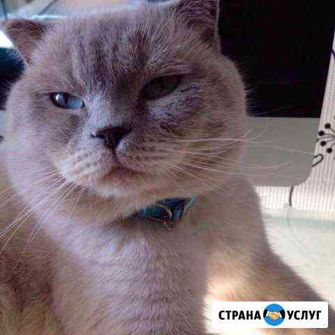 Вязка Чебоксары