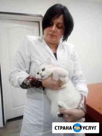 Стерилизация,кастрация котов Йошкар-Ола