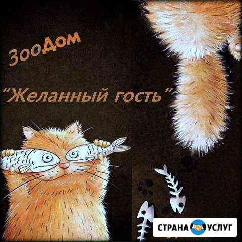 Передержка для кошек Мурманск
