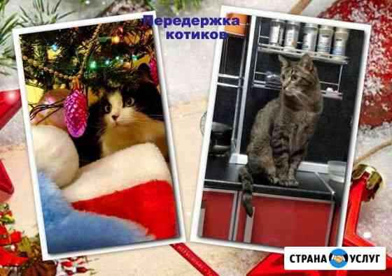 Возьму котика на передержку Мурманск