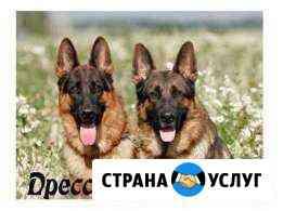 Дрессировка собак Вологда
