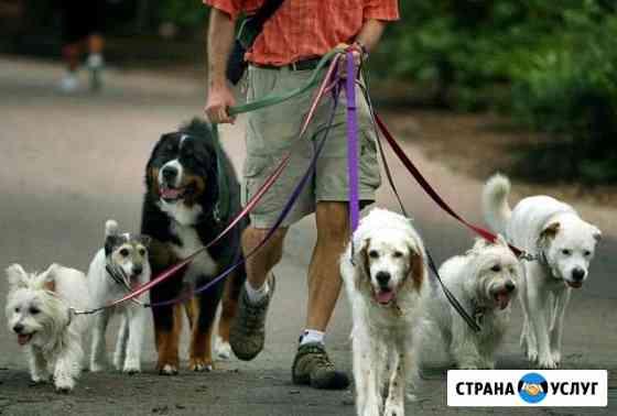 Выгул животных Нижний Новгород