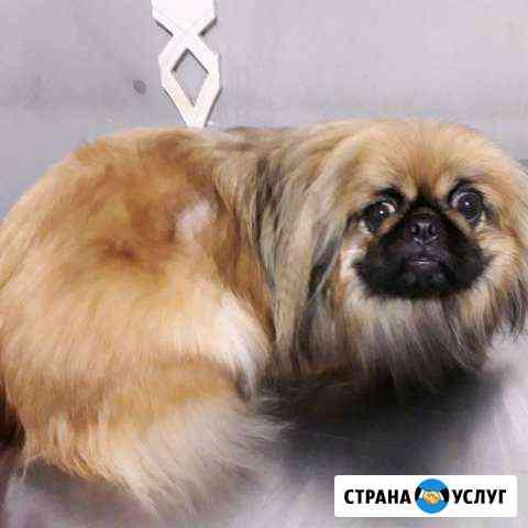 Стрижка собак и кошек Каспийск