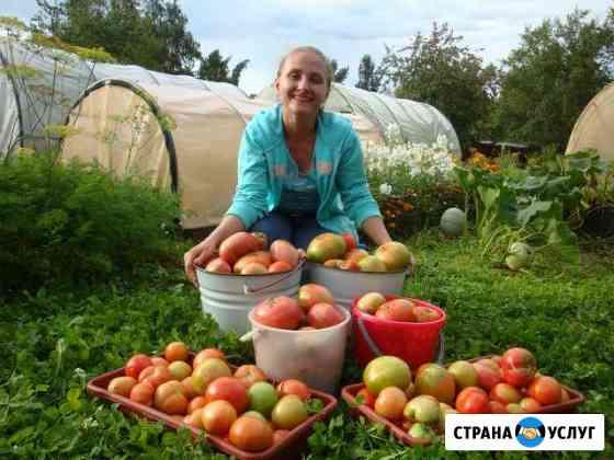 Грунт плодородный, навоз, торф, чернозем(перегной) Ярославль