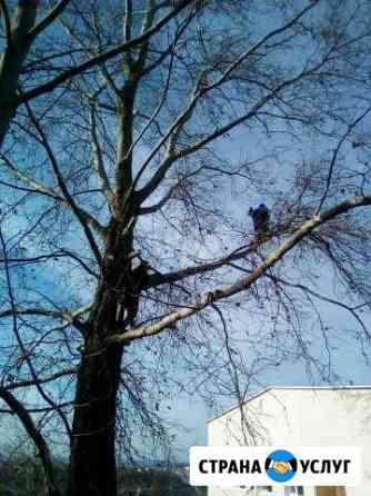 Спил деревьев,покос травы.вывоз мусора Севастополь