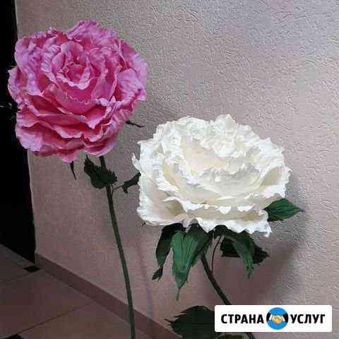 Ростовые розы Томск