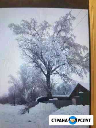 Удаление и опиловка деревьев Лиски
