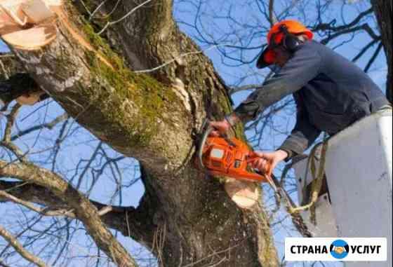 Спил деревьев профессиональный, зачистка участков Новосибирск
