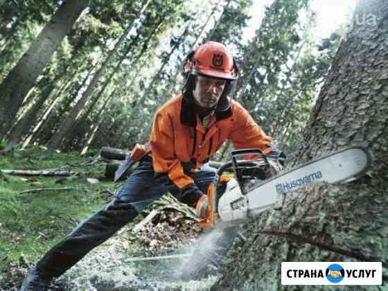 Спил деревьев Брянск