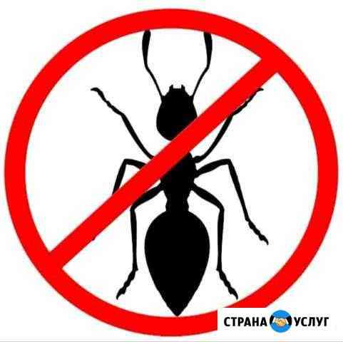 Уничтожение муравьёв и прочих насекомых Ноябрьск