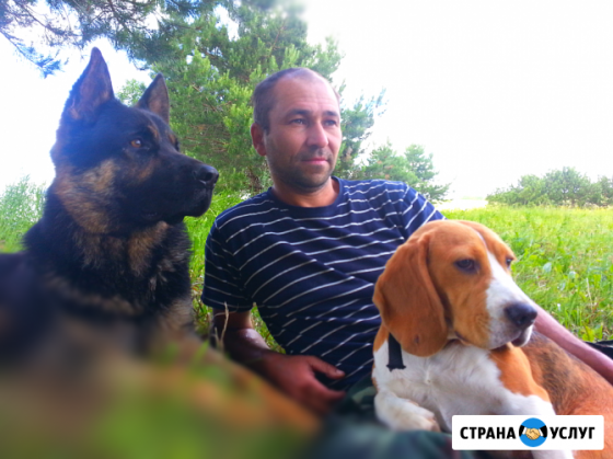 Дрессировка собак с передержкой Ижевск и пригород Ижевск