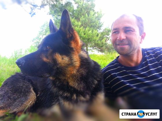 Дрессировка собак Воткинск Воткинск