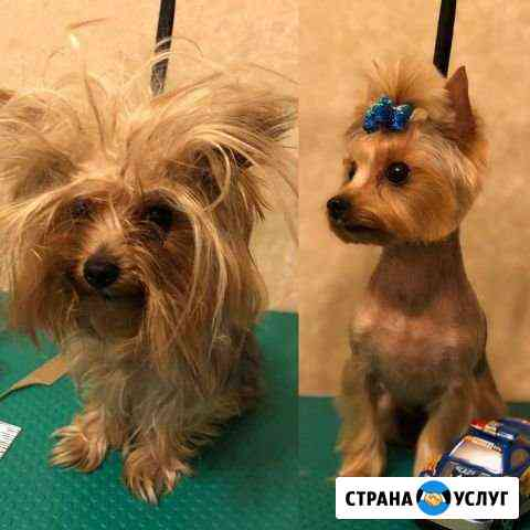 Стрижка собак и кошек Нижний Новгород