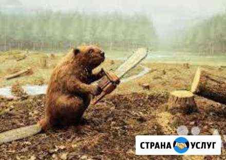 Обрезка деревьев Черкесск