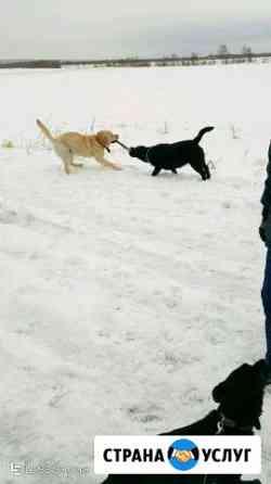 Передержка животных на частной территории Елизово
