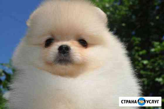Стрижка собак маленьких пород Саранск