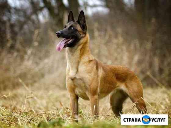 Дрессировка собак/окд Томск