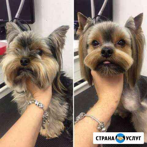 Стрижка собак. Автозавод Нижний Новгород
