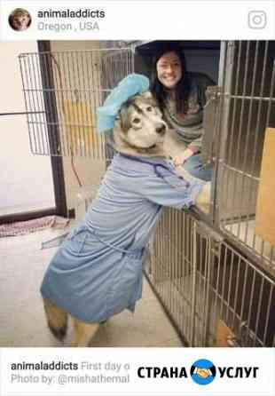 Ветеринарные услуги Тверь