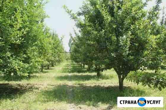 Обрезка плодовых и декоративных деревьев Обнинск