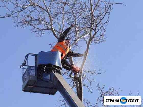 Спил подрезка деревьев Хабаровск