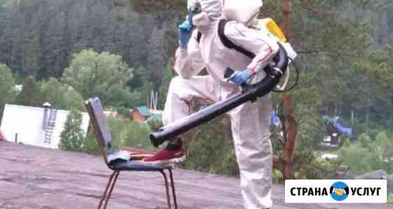 Уничтожение насекомых, грызунов, плесени, гарантия Сочи