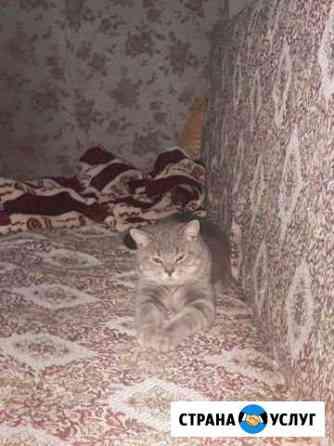 Котик на вязку Майкоп
