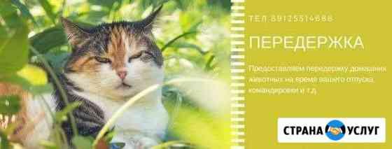 Передержка домашних животных на нашей территории Печора