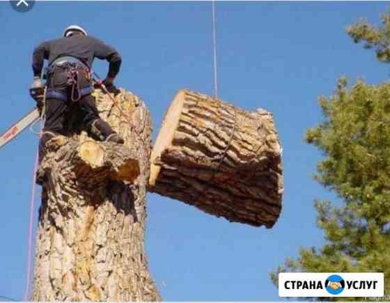 Спил# обрезка# кронирование# Кисловодск