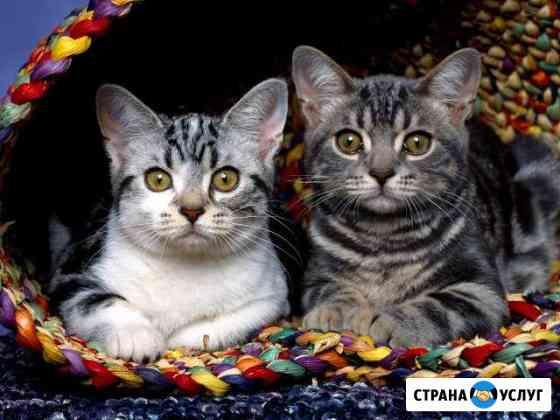 Стерилизация кошек, кастрация котов, мягкая лапка Нижний Новгород