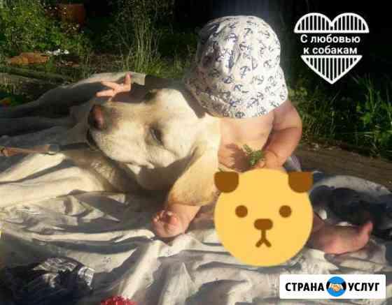 Передержка собак/Обучение послушанию Архангельск