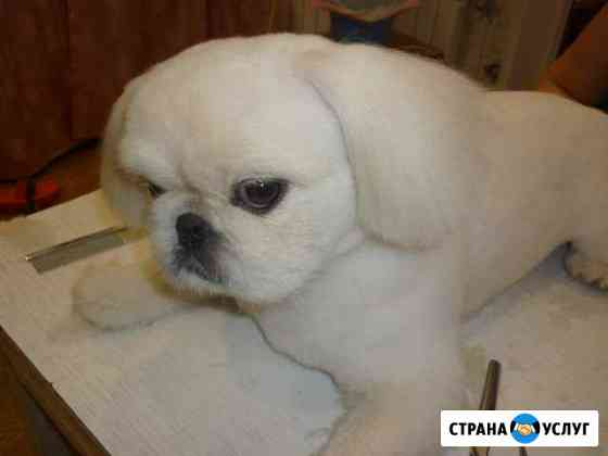 Груминг собак и кошек Йошкар-Ола