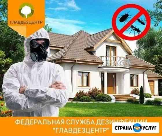 Уничтожение клопов тараканов муравьёв крыс Барнаул