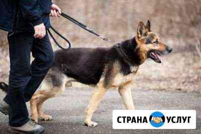 Выгул собак Инта