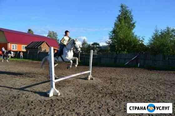 Постой лошади Петрозаводск