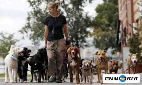 Выгул собак Смоленск