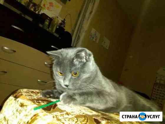 Вязка Чита
