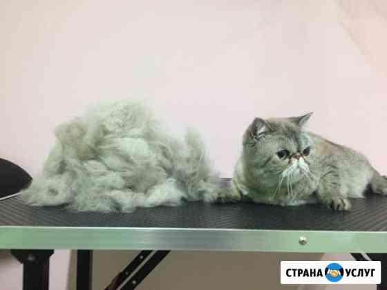 Стрижка кошек Владимир