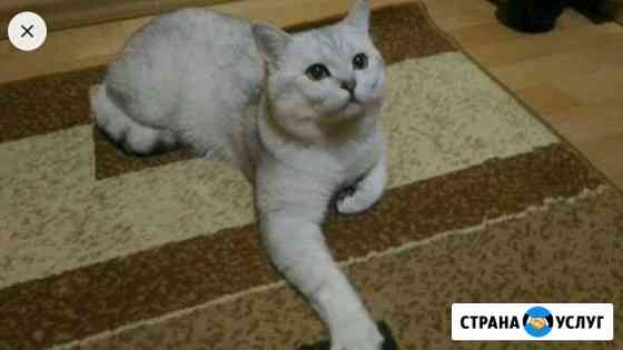 Кот на вязку Чебоксары