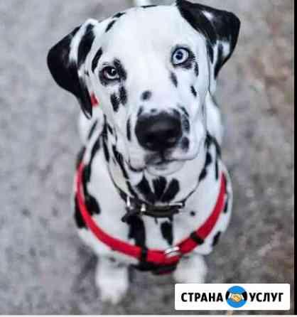 Выгул собак Чита