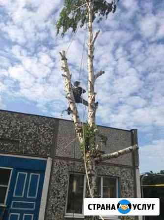 Профессиональный спил деревьев Тбилисская