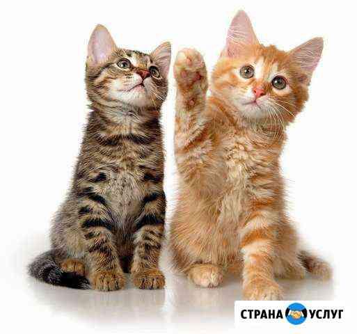 Приму на передержку кошек Сыктывкар
