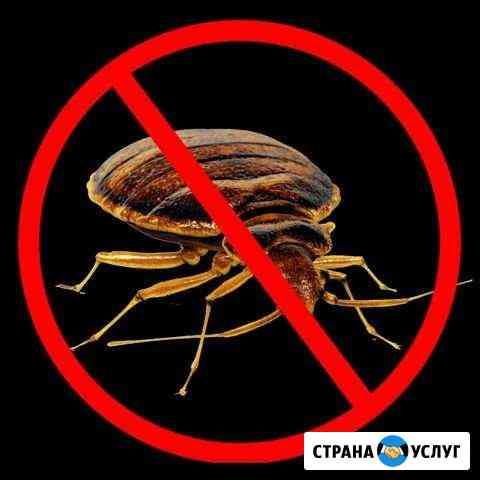 Уничтожение насекомых Брянск