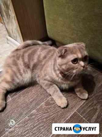 Ищу котика на вязку Петрозаводск