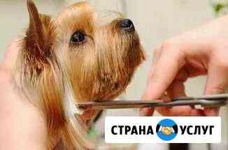Стрижка собак и кошек любых пород Воркута